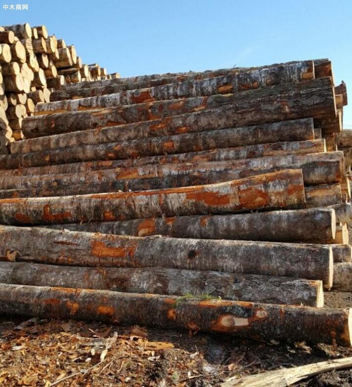家具木材种类及价格行情报价