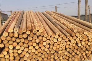 杉木原木是多少钱一吨?