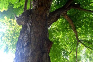 中国红木种类排名?