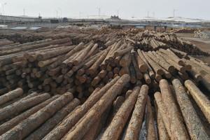 2020年俄罗斯木材和纸制品出口额减少了3.3%