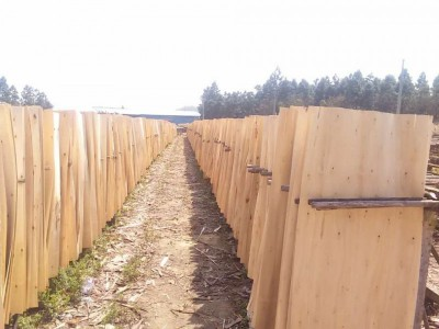 广西桉木旋切木皮厂家直销