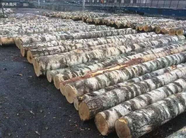 新疆额敏县开展木材场所安全生产检查工作