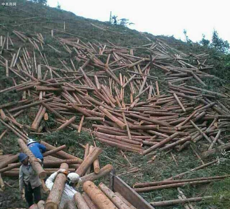 2021年1月份柳州木材采伐量同比增长1.7倍