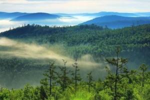 我国现有天然林资源占全国森林面积的64%