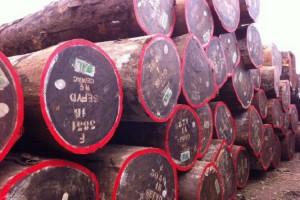 非洲进口红花梨原木价格行情_2021年02月24日