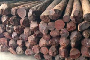 和木相处木业印度小叶紫檀原木高清图片