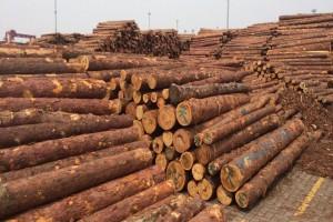 俄罗斯将完全禁止原木出口华商木材厂会怎样发展?
