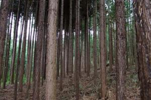 景村木材加工厂本地原木高清图片