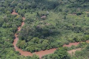 中部非洲森林观察站创建区域森林生态系统分析平台