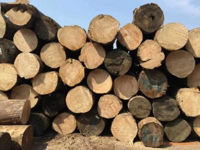 大量铁杉原木可出售加工大方料
