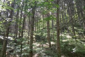 北京重点保护47种天然林木种质资源
