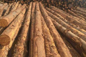 预计欧洲林场原木供应量4月份后才能完全恢复正常