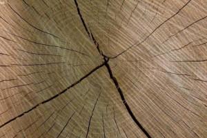 阔叶材木射线有哪些特点?