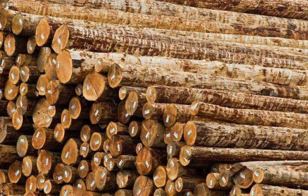 针叶材与阔叶材的区别