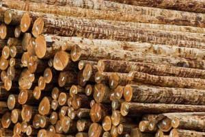 针叶材与阔叶材的区别?