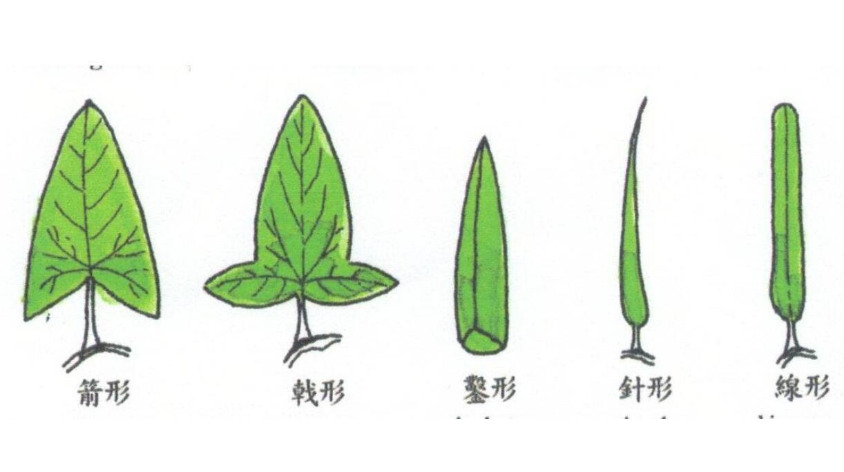 针叶材与阔叶材的区别厂家
