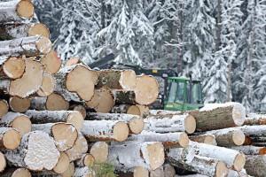 2020年瑞典原木价格跌破500克朗/立方米