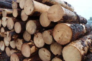 2020年中国木材进口量大幅下降