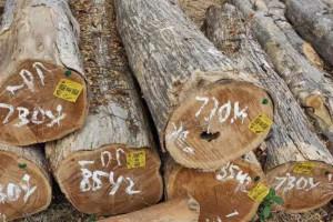 印度尼西亚出口森林制品在2020年好于预期