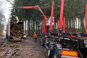 华南集运欧洲进口木材端到端业务顺利启动