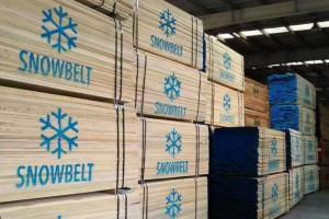 东莞吉龙木材市场国产椴木锯材价格行情_2021年3月8日