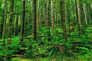 中国林产品集团执行董事及总经理变更