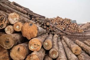 秀屿产业园区2020年实现木材进口量约150万立方米