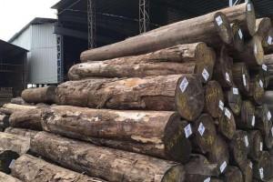 瑞典执法机构对缅甸柚木进口运营商开禁令引关注