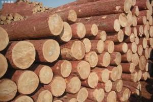大部分地区进口针叶材价格较节前上涨了100-150元/立方米