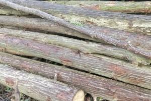 杉木原木批发