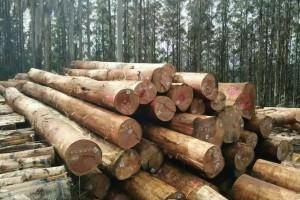 澳大利亚向中国请求恢复木材出口被中方无视