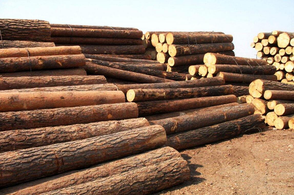 长沙已成为中国从俄罗斯进口木材的主要口岸