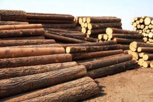 木材行情一句话,价格涨到都不好意思报价!