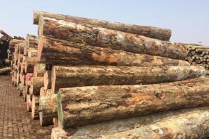欧洲1-2月采伐量下降导致3月份林场原木供应量减少