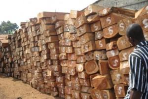 预计接下来国内非洲濒危木材将面临更严格进口审查