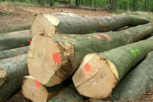 榉木原木利润被不断上涨的采购价格消耗完了