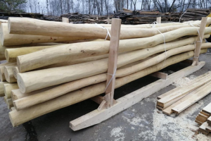 长期大量供应德国刺槐木