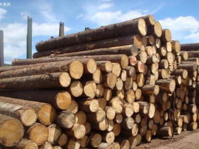 进口澳洲白松原木厂家批发价格