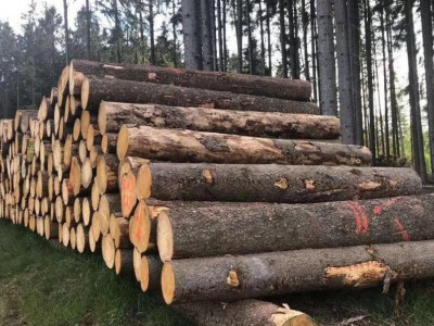美国云杉原木批发价格
