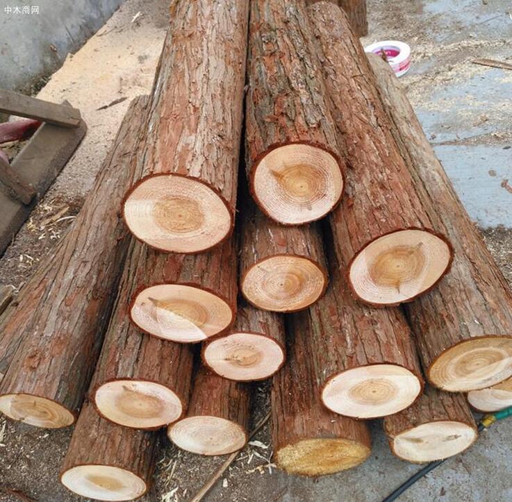 求购:香杉木原木
