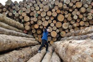 宁波梅山打造长三角进口木材集散中心