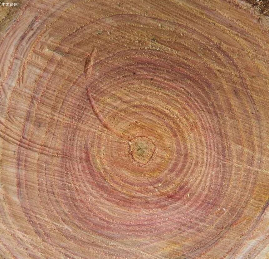 求购:香椿木原木每个月一车