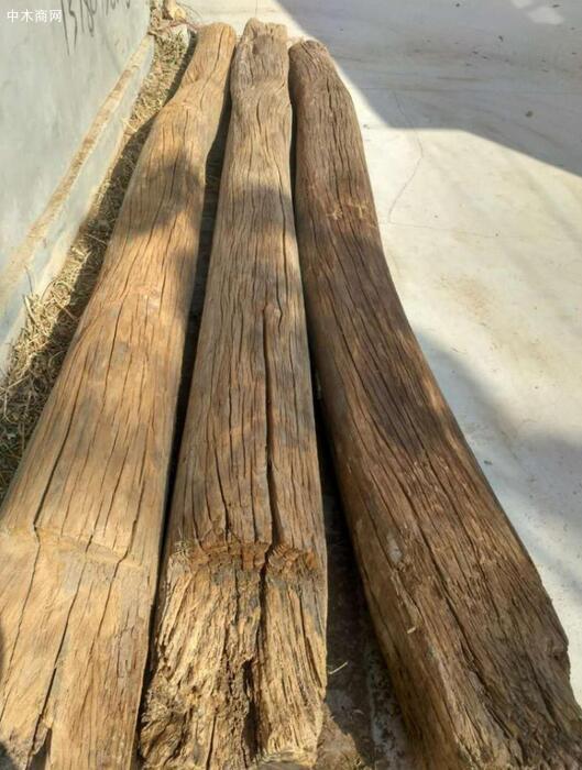 老榆木是什么树的木头及特性与优点图片