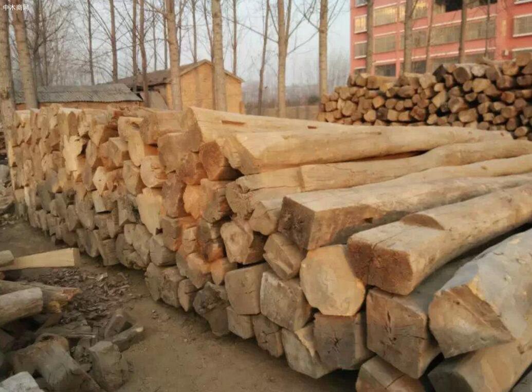 老榆木是什么树的木头及特性与优点价格