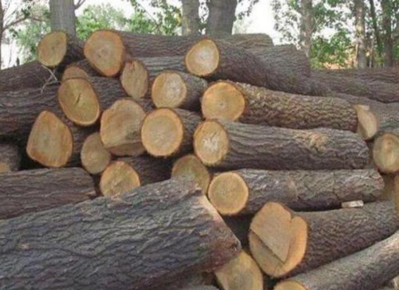 老榆木是什么树的木头及特性与优点批发