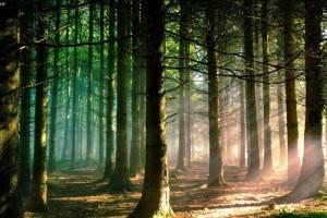 中国林业产业总值每年以两位数的速度递增