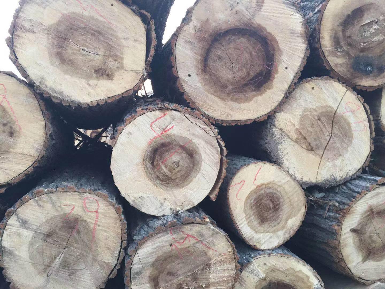大量收购白杨木原木价格