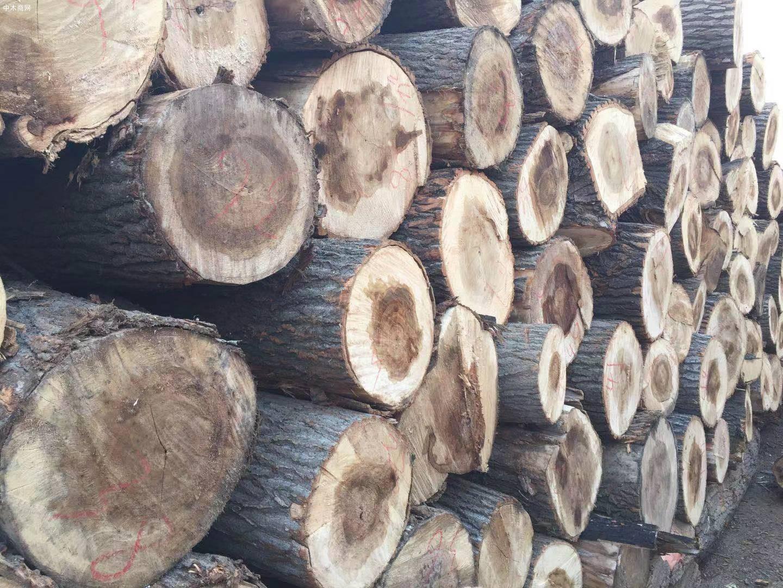 大量收购白杨木原木厂家