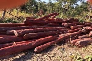 长期供应染料紫檀原木产地发货