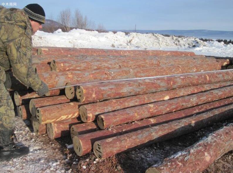 2020年俄罗斯47个地区木材非法采伐量下降